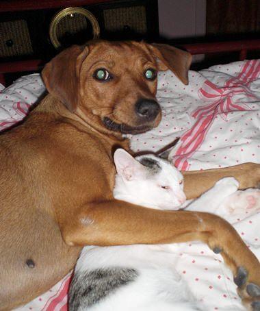 Hunde und Katzen sind durchaus starker Emotionen fähig – wie man hier an Emma (Hund) und Elisabeth (Katze) sieht.